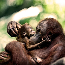 hugging in the morning by Henry Sasmita - Novices Only Wildlife