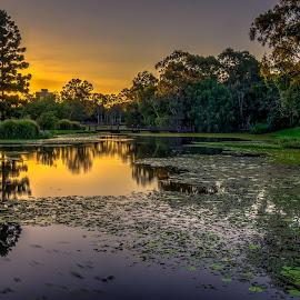 Zen by Alex Stecina - Landscapes Sunsets & Sunrises ( water, mirror, calm, sky, sunset, peace, plants, glass, zen, reflections, lake, garden, dusk, colours )