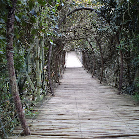 swing bridge by Nicole Janse van Vuuren - Novices Only Landscapes