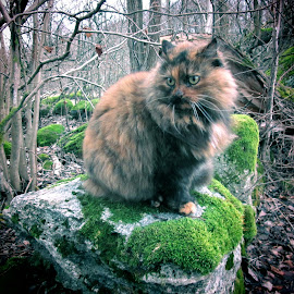 What? by Mārīte Ramša - Animals - Cats Portraits (  )