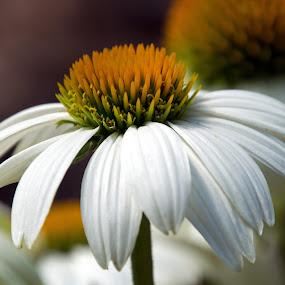 by Judy Florio - Flowers Single Flower (  )