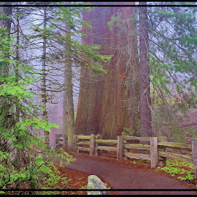 Sequoia Path by Danny Bruza - Landscapes Forests ( visitor center, sequoia, nature, redwood, tree )
