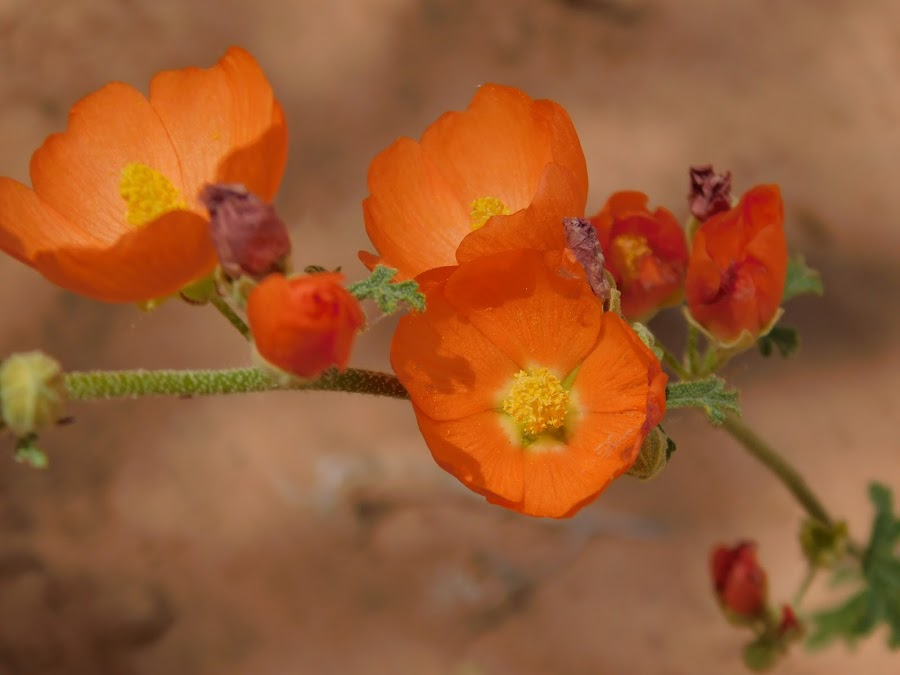 by Ron Hatch II - Novices Only Flowers & Plants