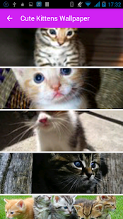 Cute Kittens Wallpaper - screenshot