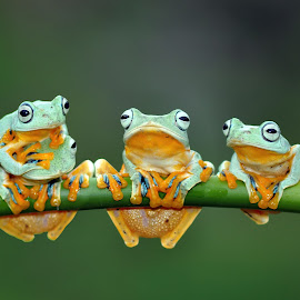 3 or 4 ? by Robert Cinega - Animals Amphibians