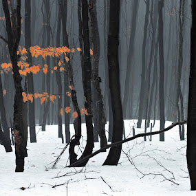 Color by Tamas Valentin - Landscapes Forests ( orange, winter, nature, forest, leaf, fogg, landscape, mist )
