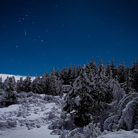 by Þórir Þórisson - Landscapes Forests ( canon, iceland, sparkling, night photography, sigma, stars, snow, trees, long exposure, forest )