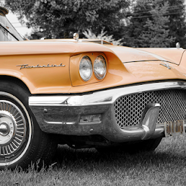 Thunderbird  by Todd Reynolds - Transportation Automobiles