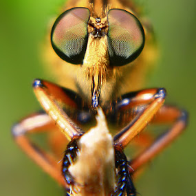 by Adie Photograph - Animals Insects & Spiders