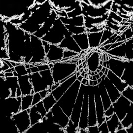 Frosting on spiderweb by Natasja Martijn - Nature Up Close Webs ( macro, winter, frosting, spiderweb, web )