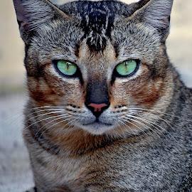 Enjoy by AbngFaisal Ami - Animals - Cats Portraits