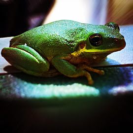 Treefrog by Tyrell Heaton - Instagram & Mobile iPhone