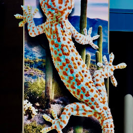 Ginormous  Gecko by Donna Probasco - Animals Amphibians