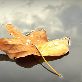 by Rima Biswas - Nature Up Close Leaves & Grasses ( water, fall leaves on ground, reflection, nature, fall, brown, leaf, yellow )