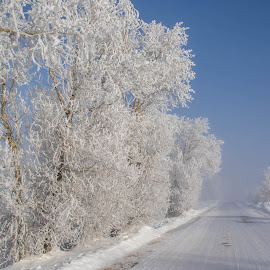 Frost along the way by Chad Roberts - Nature Up Close Trees & Bushes ( blue sky, winter, cold, fog, snow, frost, morning, frozen,  )