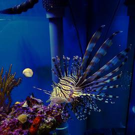 by Rhonda Rossi - Animals Fish