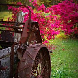 Wagon wheel by Brenda Shoemake - Artistic Objects Antiques (  )