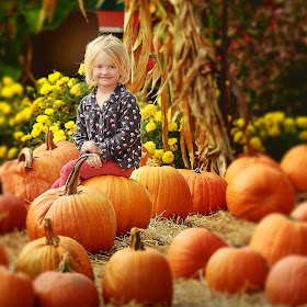 The Great Pumpkin Patch.jpg