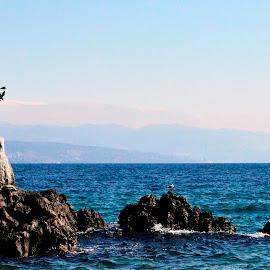 by Marko Kosanović - Buildings & Architecture Statues & Monuments ( water, rijeka, opatija, statue, seagull, nature, blue, sea, seascape, landscape,  )