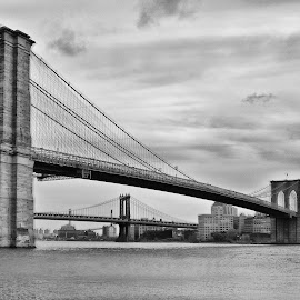 The Brooklyn Bridge  by Sandy Friedkin - Buildings & Architecture Bridges & Suspended Structures ( booklyn, bridge suspension, east river, nyc )