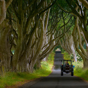 Dark Hedges and tractor_1600.jpg