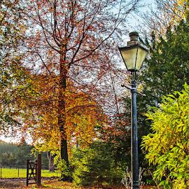 Autumn Morning by Martin Davis - City,  Street & Park  Neighborhoods ( drive, path, lamp, lamppost, beech tree, entrance, gate )