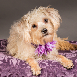 by Myra Brizendine Wilson - Animals - Dogs Portraits ( greater charlotte spca foster, canine, dogs, pet, pets, foster henrietta, gcspca, dog, henrietta, foster dog henrietta, greater charlotte spca,  )