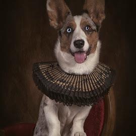 Finn by Carola Kayen-mouthaan - Animals - Dogs Portraits ( fine art, dog, portrait )