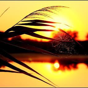 In the spotlight by Suzanna Nagy - Landscapes Sunsets & Sunrises