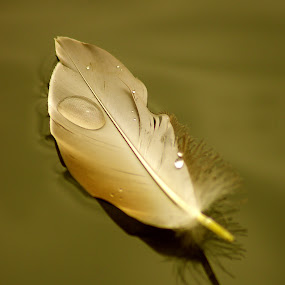 Feather  by Ian Flear - Artistic Objects Other Objects