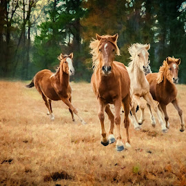 Run Free by Robert Mullen - Animals Horses ( field, gallop, horses, ponies, horse, pastures, trees, stables, running )