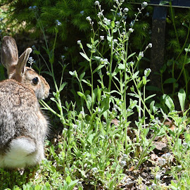 Bunny In the Wild  by Lorraine D.  Heaney - Animals Other Mammals