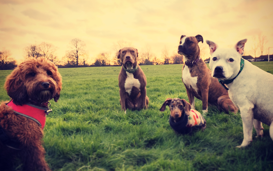 dog walking Maidstone | dog walker in Snodland| Doggy days at the beach