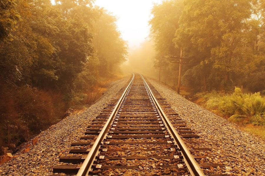 Summer Fog by Aaron Shaver - Landscapes Weather ( warm, fog, mood, train, summer, lines, tracks, light, , path, nature, landscape )
