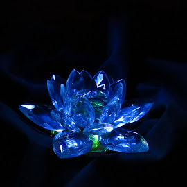 Lotus by Shubh Pallav - Artistic Objects Glass ( lotus, blue, low key, low light,  )