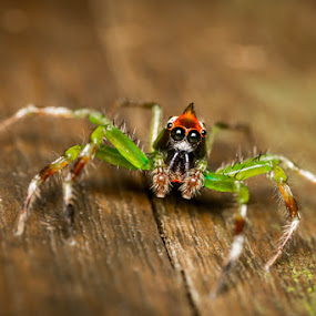 I've got my hair gel up like Beckam. by Calvin Chan - Animals Insects & Spiders