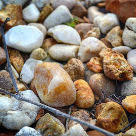 Rocks by Shalimar Rodriguez de Paez - Nature Up Close Rock & Stone