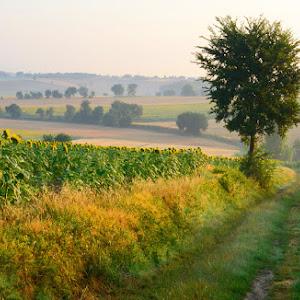 landscape10.jpg