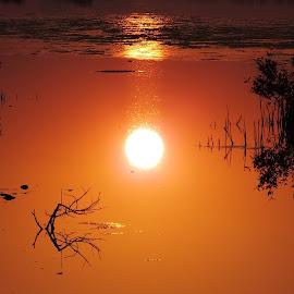 Reflection of Sun by Nikhil Mali - Nature Up Close Water