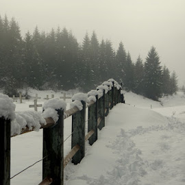 Sneg II by Donat Piber - Landscapes Prairies, Meadows & Fields ( fog, snow, border )
