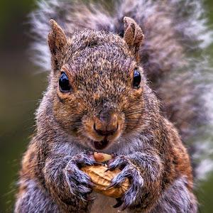 squirrel-1-2.jpg