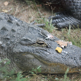Say Cheese by Stacey Baumgardner - Animals Reptiles ( 5 )