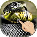 App Magic Touch Cobra Attack APK for Windows Phone