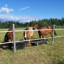 Three Pets by Gilman Michaud - Animals Horses