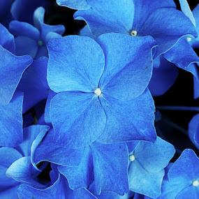 by Sirinat Tanamai - Nature Up Close Flowers - 2011-2013