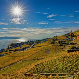 Swiss vineyards by Radu Eftimie - Landscapes Prairies, Meadows & Fields ( lake of leman, vineyards, vevey region, switzerland, sun )