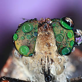UNTITLED 02 by Satriyo Andoyo - Animals Insects & Spiders ( macro )