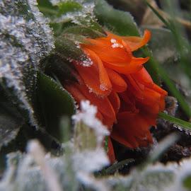 by Robert Gartner - Nature Up Close Gardens & Produce ( jutranji sprehod )