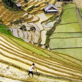 Sapa, Vietnam by Alister Munro - Landscapes Prairies, Meadows & Fields (  )