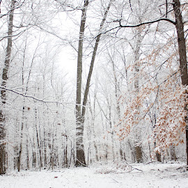 Snow day by Kim Tindol - Nature Up Close Trees & Bushes